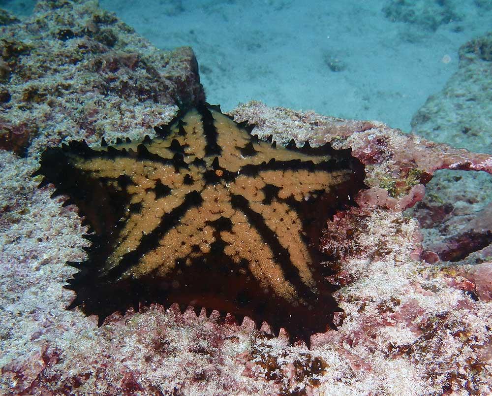 Underwater species – In Darwin's footsteps . . .